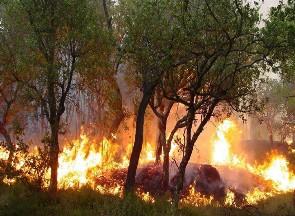Un voraz incendio destruye casi cuatro hectáreas de monte bajo en Fontanales