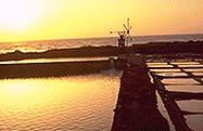 Tenefé: las únicas salinas en activo de Canarias