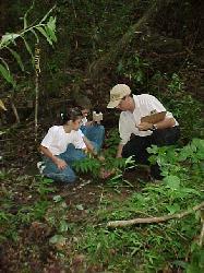 La reforestación de nuestros montes, en peligro por la habitual negligencia del Gobierno canario