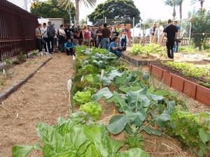 Agricultura ecológica y frutas tropicales, claves para el desarrollo agroalimentario en el municipio de Santa Lucia