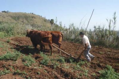 El envejecimiento poblacional y el deseo de emigrar de los jóvenes, problemas de los municipios rurales de Gran Canaria