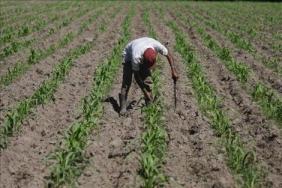 El Cabildo de Gran Canaria censura que el comisario de Agricultura de la UE sólo visite la isla de Tenerife
