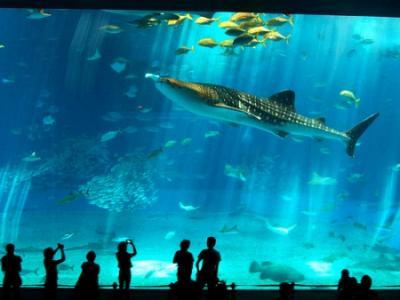 El Ayuntamiento da luz verde al nuevo acuario en Las Palmas de Gran Canaria