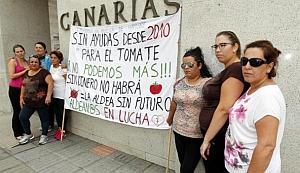 Las mujeres de La Aldea salvan al sector tomatero de los incumplimientos del Gobierno de Canarias