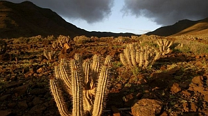 Gran Canaria, camino de ser la única isla de Canarias sin parque nacional, mientras que Fuerteventura avanza ejemplarmente para conseguirlo