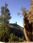 Salvajada en la cumbre de Gran Canaria