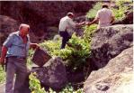 Vendimia en El Monte Lentiscal